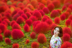 【日本旅拍】红毛丹盛开的山坡