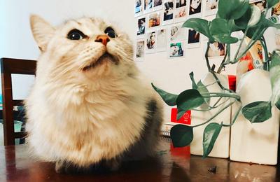 我们家的三金姐弟(猫狗多图高萌预警!)