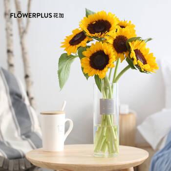 FlowerPlus花加 家用鮮花水養洋牡丹花束禮物玫瑰云南產地直發鮮花速遞包郵 優選向日葵5枝,3.6起陸續發貨,降價幅度49.3%