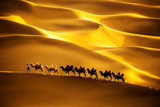 新疆北疆之行(2)大漠驼队