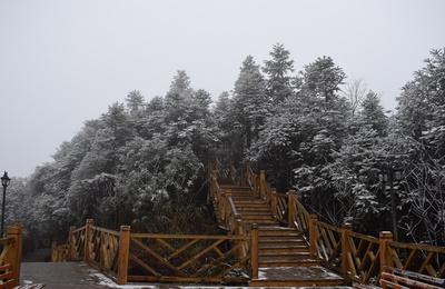 雪后的箐山森林公园(贵州习水拍摄)