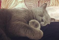 单纯的晒猫——多图预警