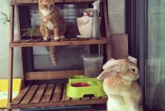 喵兔酱日常
